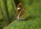 La Paz Beautiful Bug