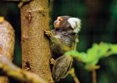 Zoo Ave Monkey
