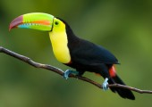 zoo ave toucan