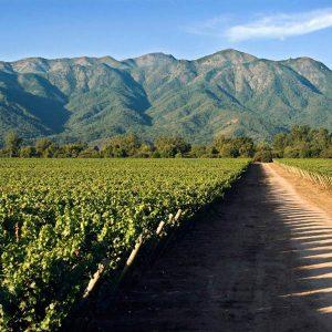 quintay vineyard