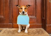 hoteldog