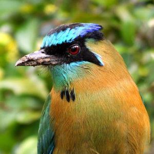 Birding at Villa San Ignacio