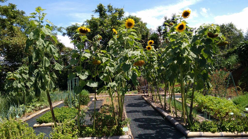 Jardín Botánico El Arca De Las Hierbas