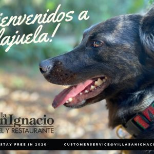 Dog Friendly Alajuela
