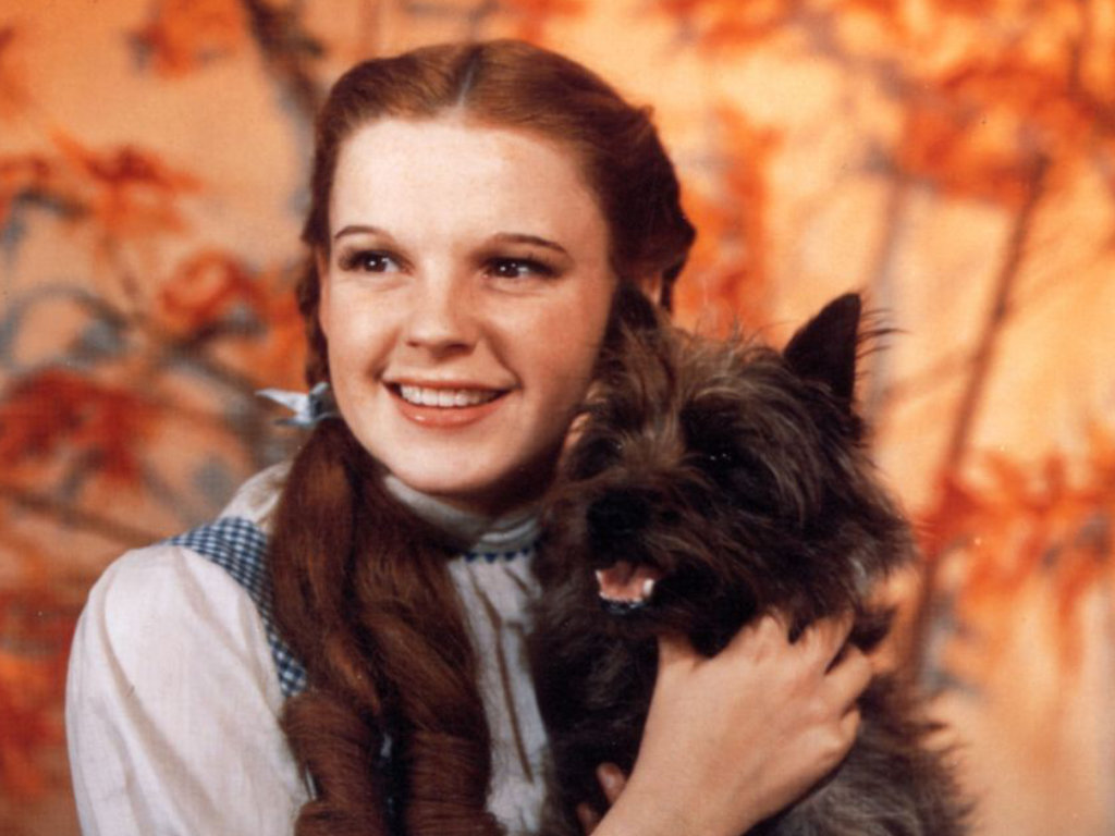 Dorothy and Toto 20th Century Pet Friendly