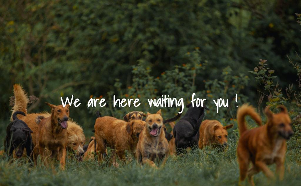 Territorio de Zaguates Adopte un Perro