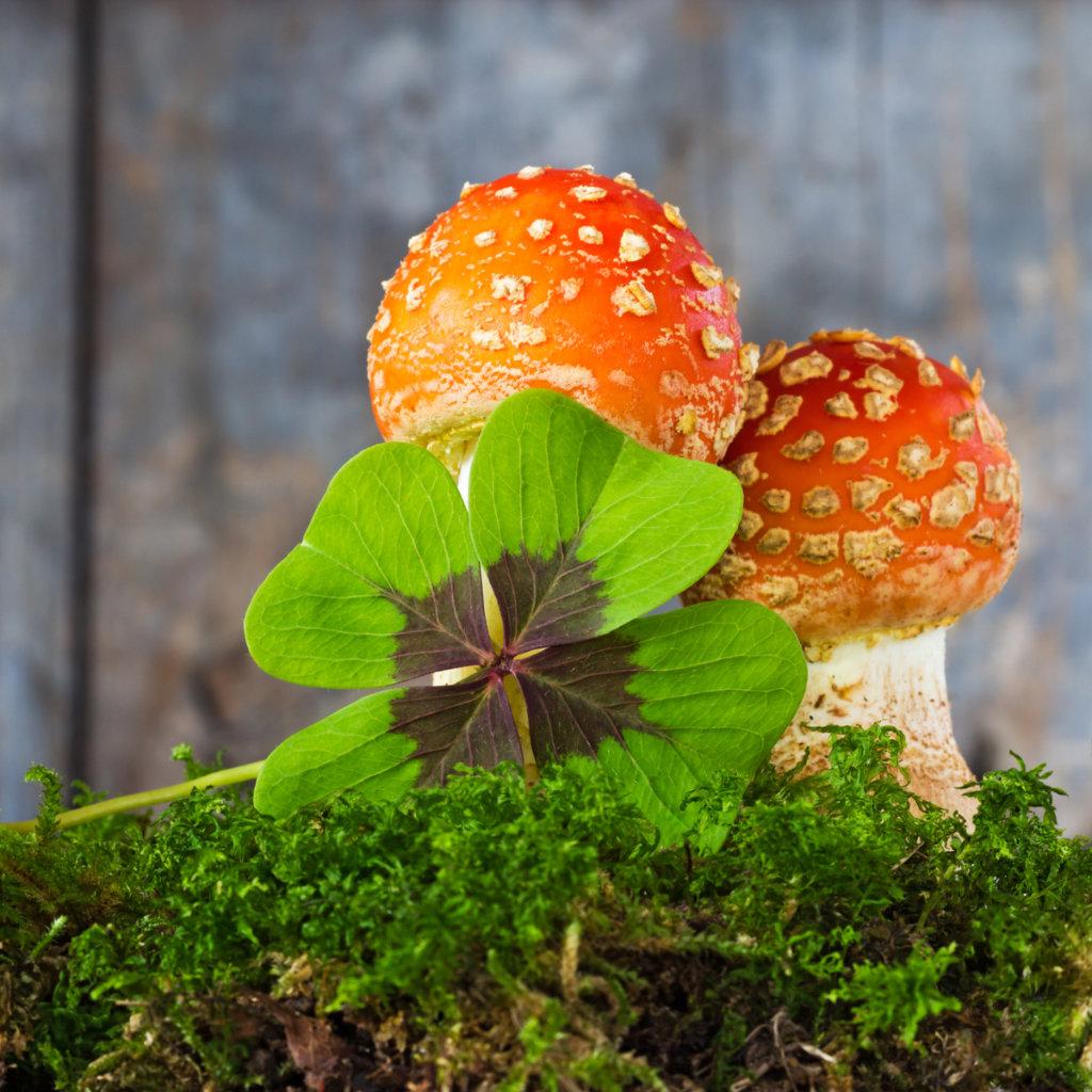 The Lucky Mushroom