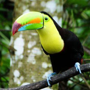 Common, Beautiful Birds Of Villa San Ignacio