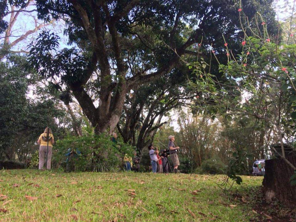 Pajareando en Villa San Ignacio