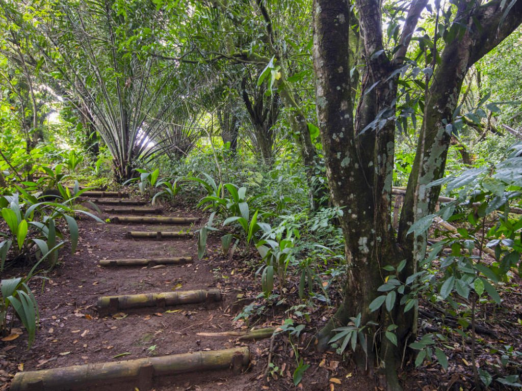 Birding trails at Hotel Villa San Ignacio Costa Rica