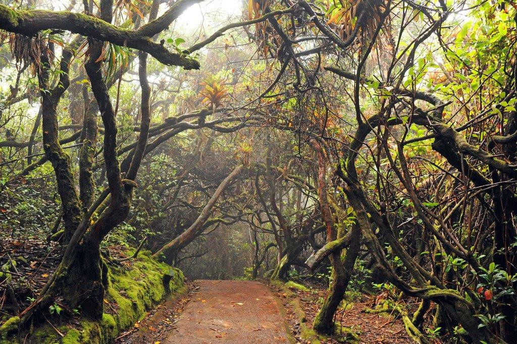 Nature Trail at Poás Volcano National Park, Alajuela, Costa Rica