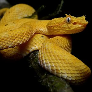 Our Fear and Fascination of Snakes