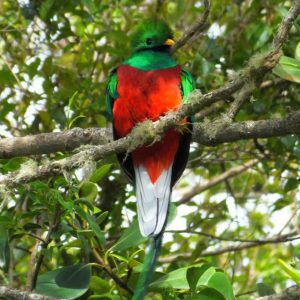 5 Insider Tips to See a Quetzal in Costa Rica
