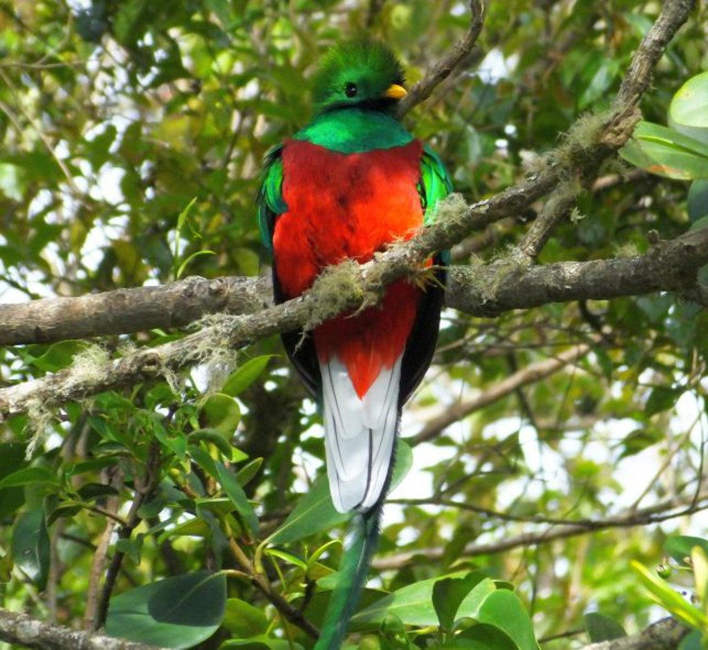 The resplendent quetzal can be found in Costa Rica