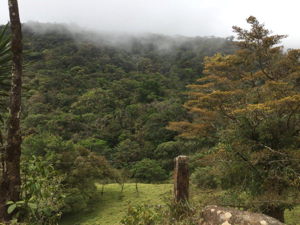 Bosque Nuboso en San Ramón