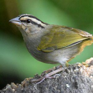 5 Benefits of Birding in Costa Rica during the Wet Season
