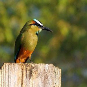 3 Exciting Birding Trips Easily Done from Villa San Ignacio