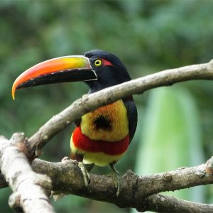 3 Overlooked Tips for Better Bird Photography in Costa Rica