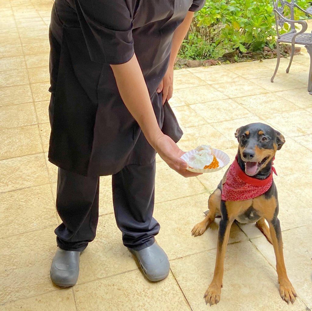 Meet Rita, Hotel Villa San Ignacio's resident dog and dog cuisine taste tester